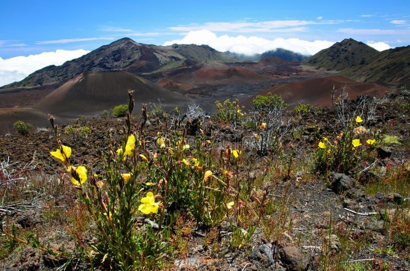 Het Nationale Park van Haleakala stock foto