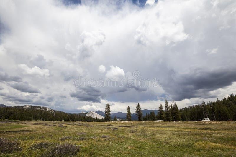 Het Nationale Park van Yosemite van Toulumneweiden stock foto's