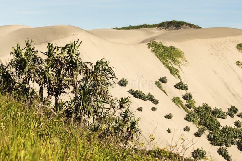 Het Nationale Park van zandduinen royalty-vrije stock foto