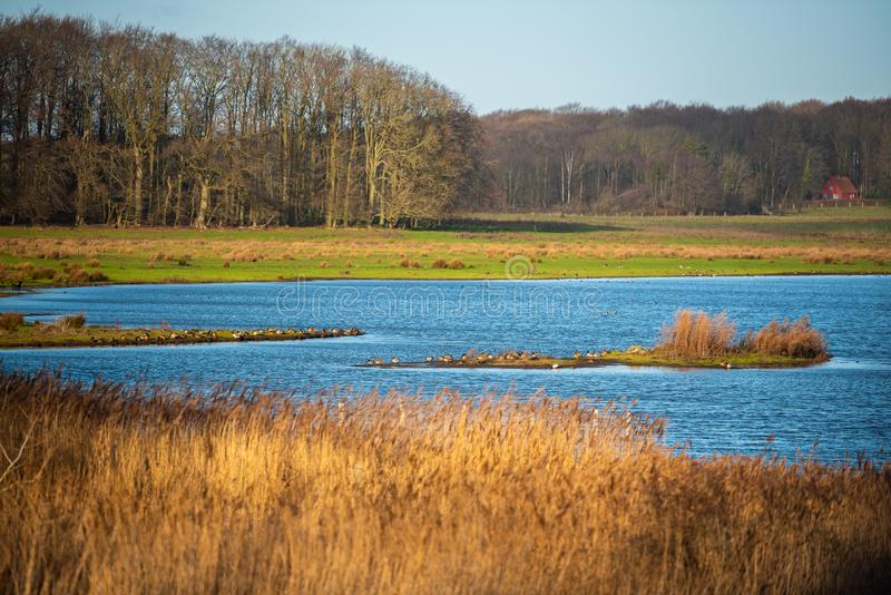 Het natuurlijke paradijs Geltinger Birk in noordelijk Duitsland stock foto