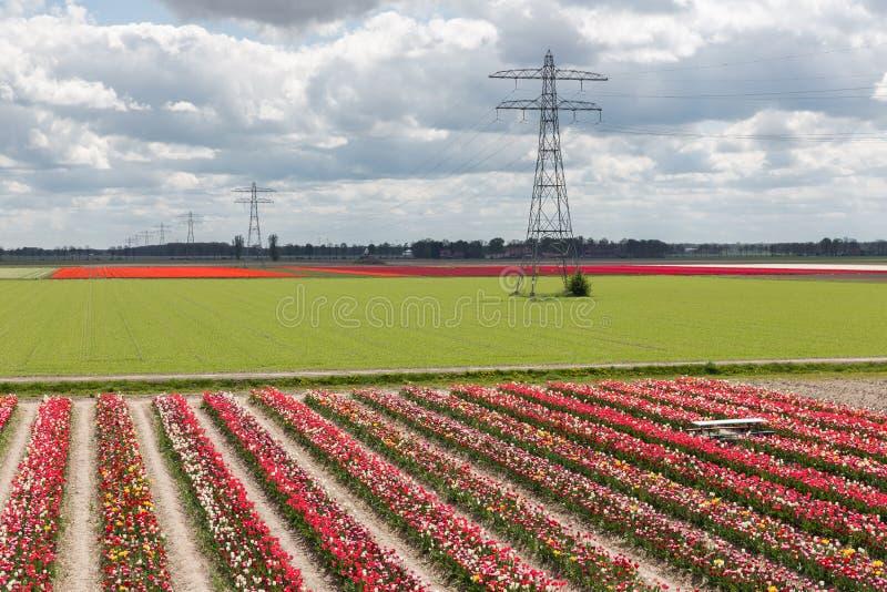 Het Nederlandse landschap met tulp toont tuin en elektriciteitspyloon royalty-vrije stock foto's
