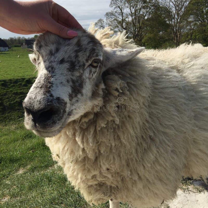 Download Het Neemt Vriendelijk Niets Vanaf Een Mens, Om Aan Een Dier Te Zijn Stock Afbeelding - Afbeelding bestaande uit vreedzaam, dier: 107701303