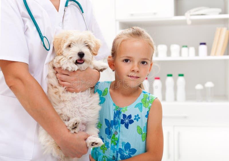 Het nemen van mijn van een hond aan veterinair royalty-vrije stock afbeelding
