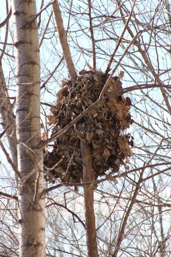 Het nest stock afbeeldingen