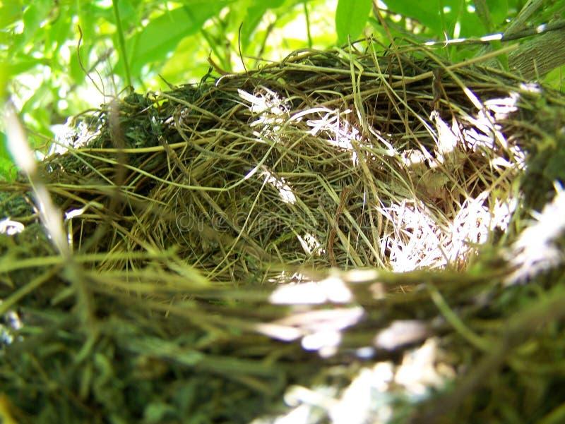 Het nest op de boom, sluit omhoog stock foto's