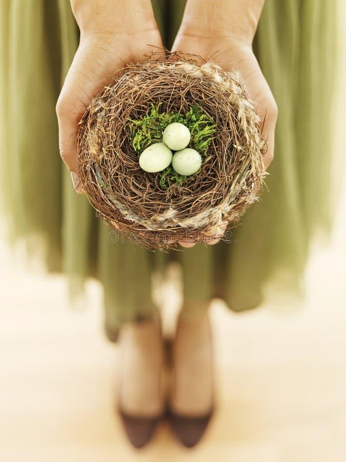 Het nest van de de holdingsvogel van de vrouw stock fotografie