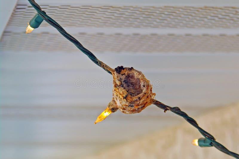 Het Nest van de kolibrie stock afbeeldingen
