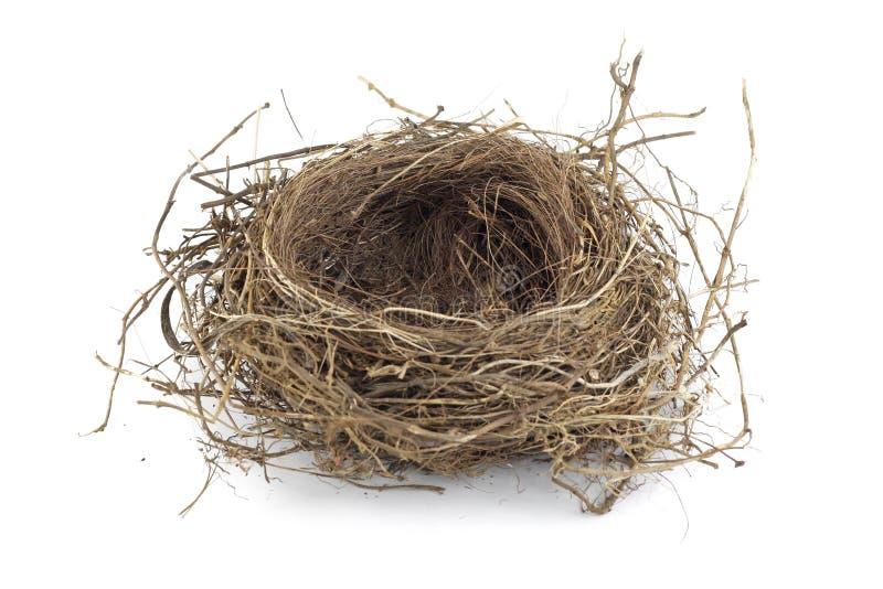Het nest van de vogel royalty-vrije stock fotografie