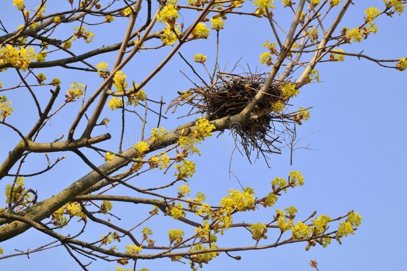 Het nest van de vogel in boom royalty-vrije stock afbeeldingen
