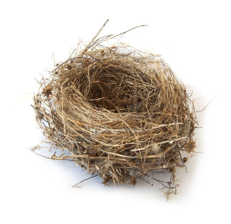 Het nest van de vogel dat op wit wordt geïsoleerdo