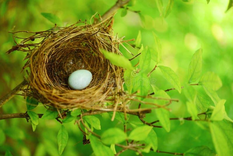 Het nest van de vogel op boom royalty-vrije stock afbeelding