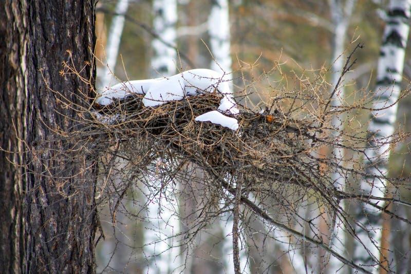 Het nest van de vogel in het de winterbos stock foto