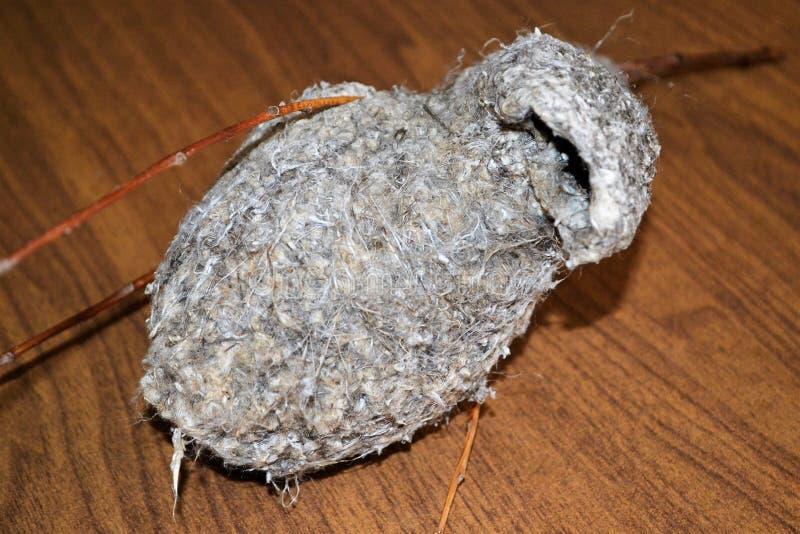 Het nest van de weversvogel op een tak royalty-vrije stock foto