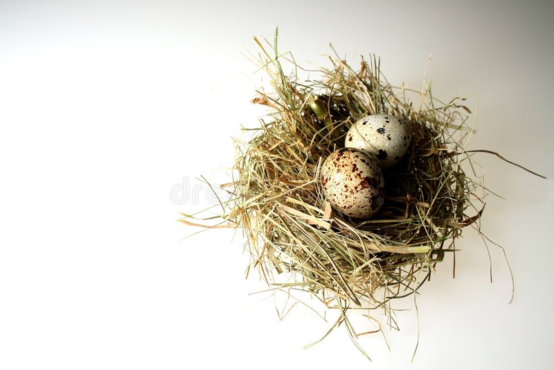 Het nest van vogels