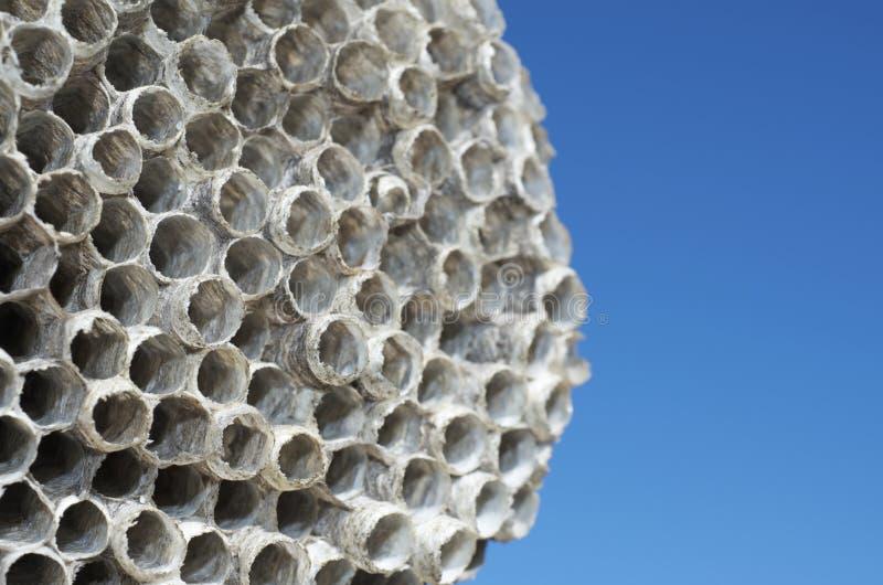 Het nest van wespen royalty-vrije stock afbeelding