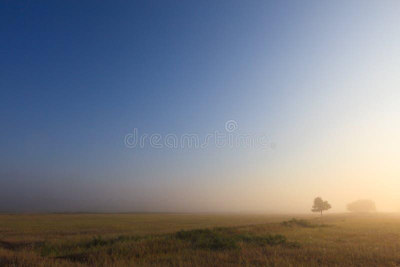 Het nevelige landschap van de de aardweide van de dageraad vroege ochtend royalty-vrije stock foto's