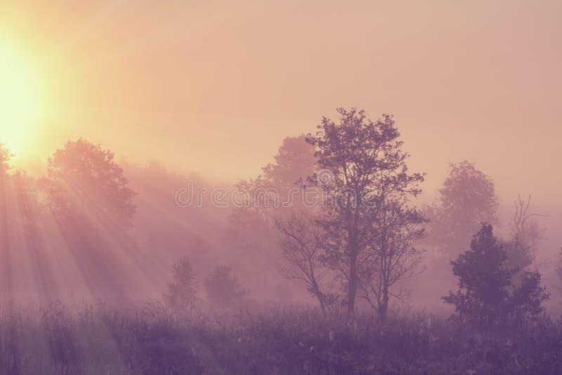 Het nevelige landschap van de de lenteochtend op heldere zonsopgang met levendige zonnestralen door bomen op weide stock fotografie