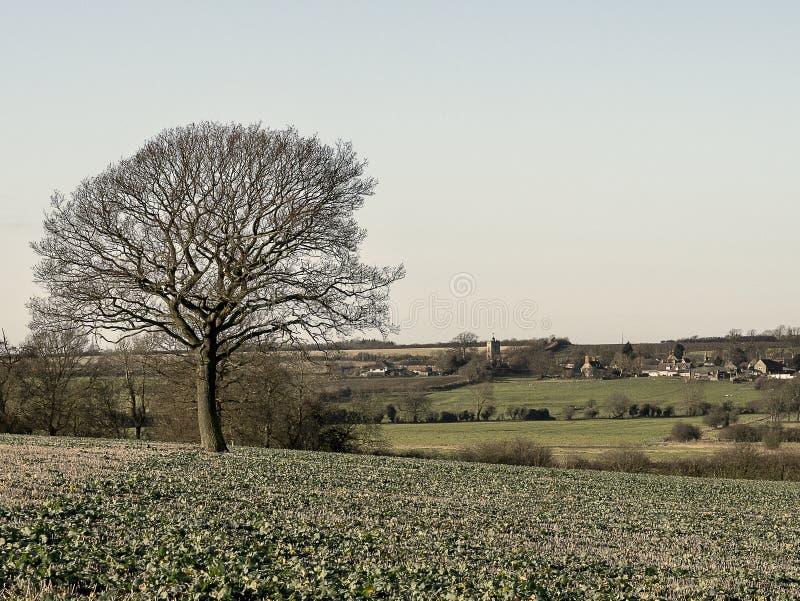 Het nieuwe Dorp van de cropfield Eenzame Boom in afstand stock afbeeldingen