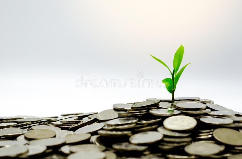 Het nieuwe groene bladereninstallatie groeien in besparingenmuntstukken stock afbeelding