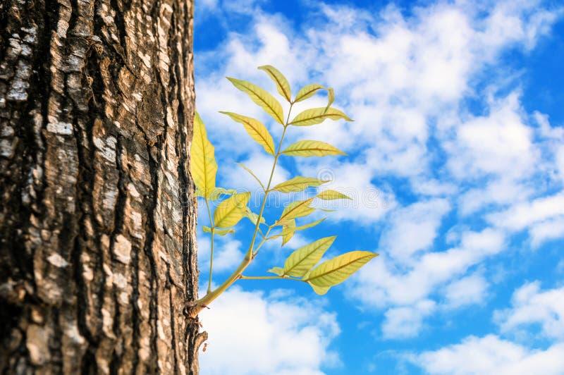 Het nieuwe het leven groeien op het oude hout stock fotografie
