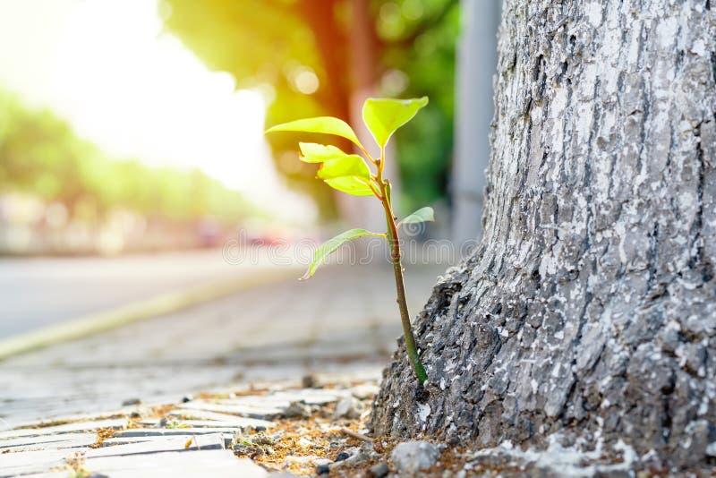 Het nieuwe nieuwe leven, - de geboren groene verlofgroei op de oude boom, de zomerconcept stock foto