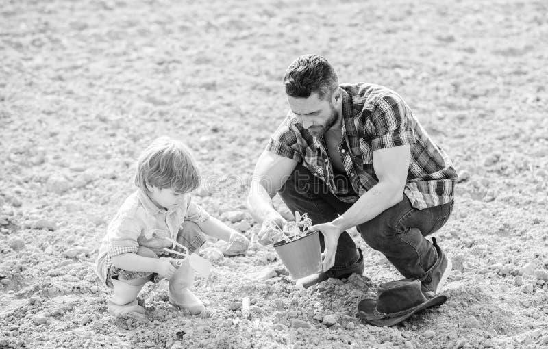 Het nieuwe leven gronden en meststoffen vader en zoon die bloemen in grond planten rijke natuurlijke grond Ecolandbouwbedrijf De  stock foto