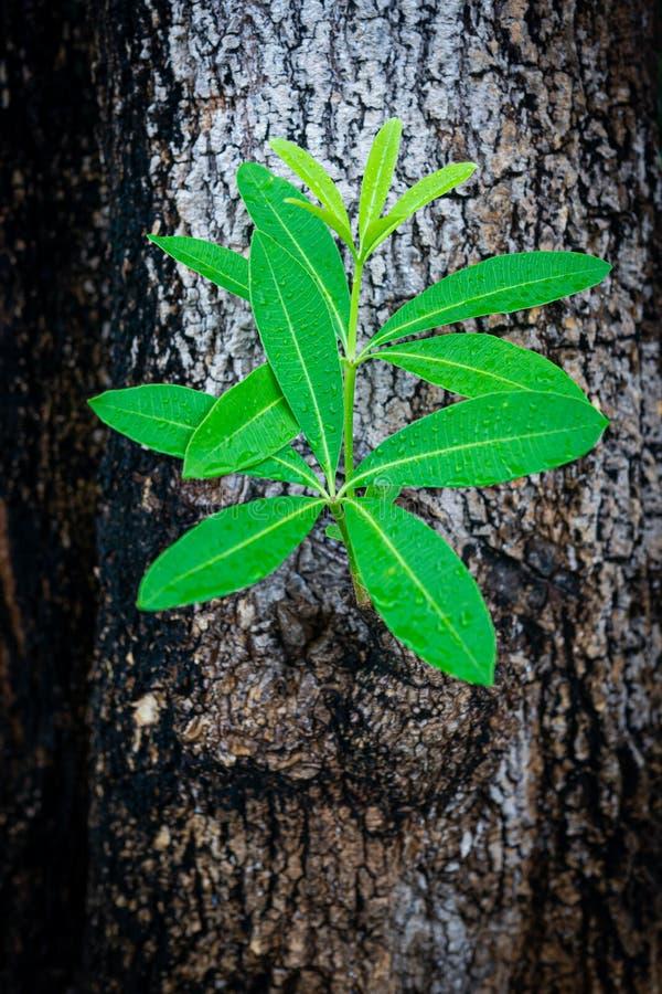 Het nieuwe verlof groeien van lichaamsboom stock afbeeldingen