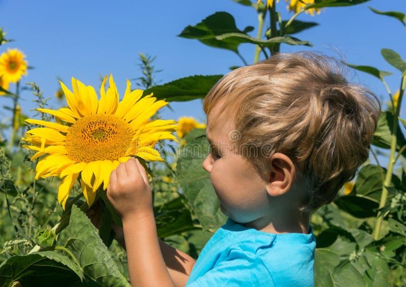 Het nieuwsgierige kind overweegt zonnebloem op het gebied royalty-vrije stock afbeeldingen