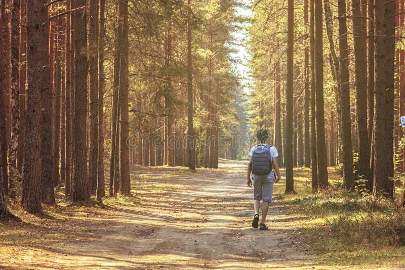 Het nieuwsgierige kind wandelt door het hout behandelend zijn lichaam en mening De verse lucht helpt ons gezond longenverblijf stock afbeelding