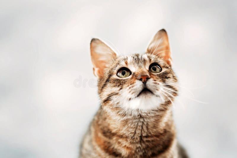 Het nieuwsgierige leven van een kat stock foto's