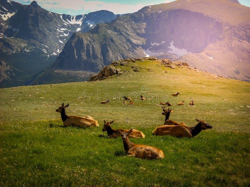 Het noordelijke Nationale Park van Colorado Estes Park Colorado Rocky Mountain royalty-vrije stock afbeeldingen