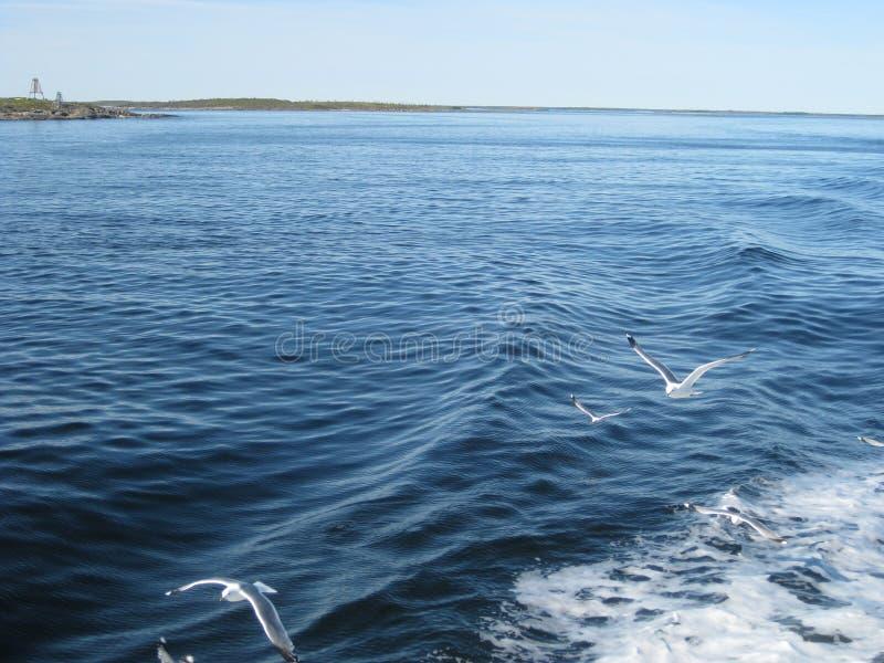 Het noorden De mening van het overzees aan de kust Zeemeeuwenvlieg over het water stock foto