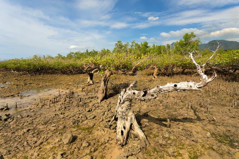 Het Noorden Sulawesi, Indonesië van de mangroveboom royalty-vrije stock fotografie