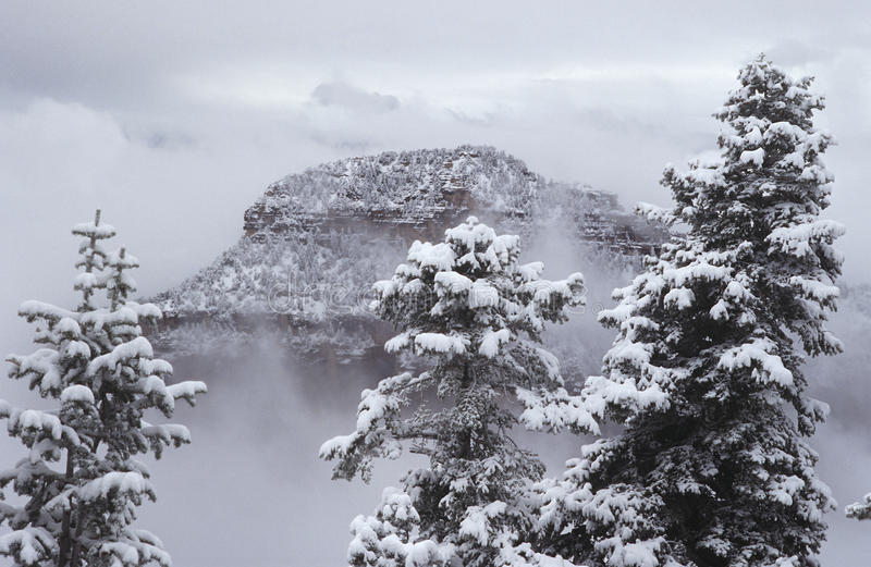 Het Noordenrand van de V.S. Arizona Grand Canyon in sneeuw stock afbeeldingen