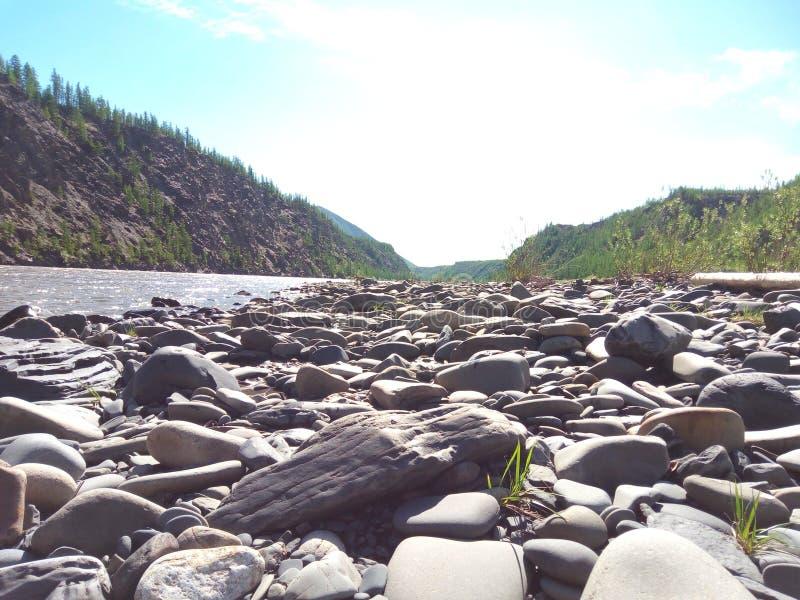 Het Noordse bos stock foto