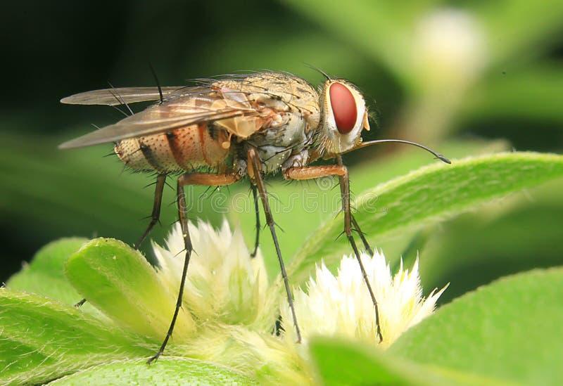 Het ogenblik alleen insect van het vliegeninsect royalty-vrije stock foto