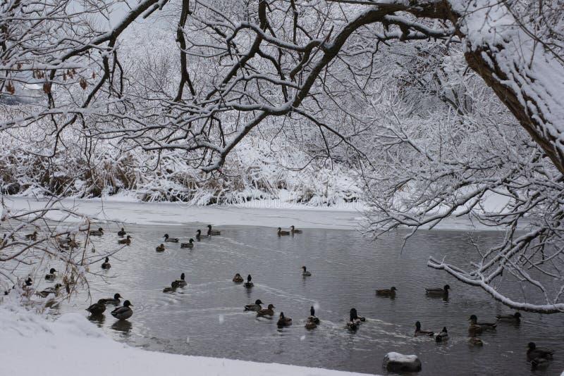 Het Ogenblik van de de wintervijver stock foto