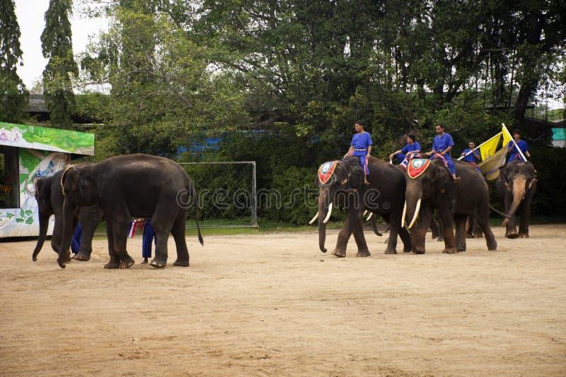 Het olifantsthema toont bij Samphran-Olifantsgrond en Krokodillandbouwbedrijf in Nakhon Phatom, Thailand stock foto's