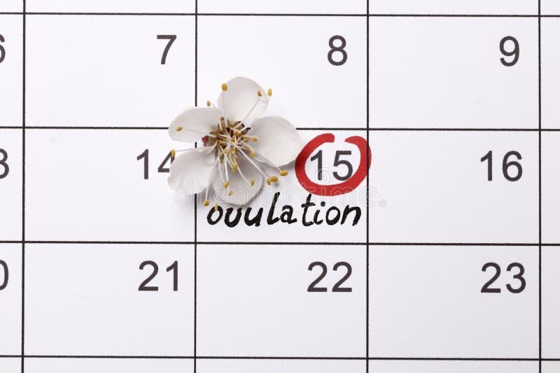 Het omcirkelen van de datum die babycalendar proberen te hebben stock afbeelding