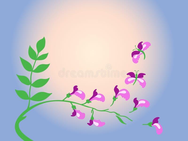 Het omzetten van purpere acacia in vlinder.