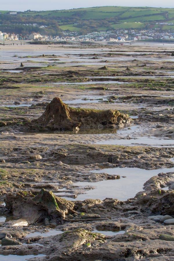 Het ondergedompelde bos op het strand in Borth royalty-vrije stock fotografie