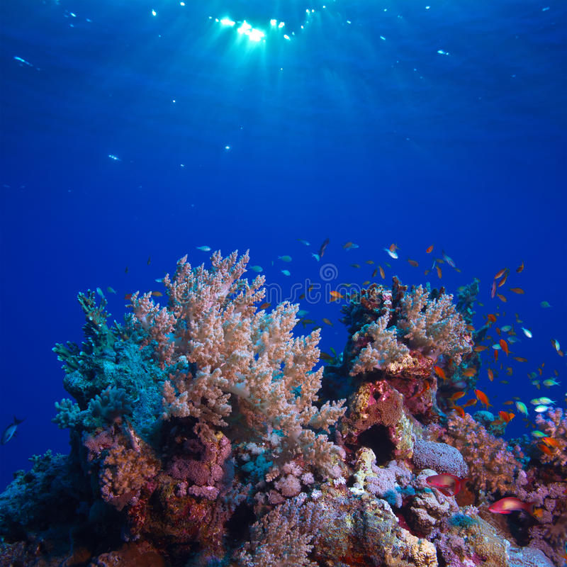 Het onderwater hoogtepunt van het landschaps mooie koraalrif van kleurrijke vissen royalty-vrije stock afbeelding