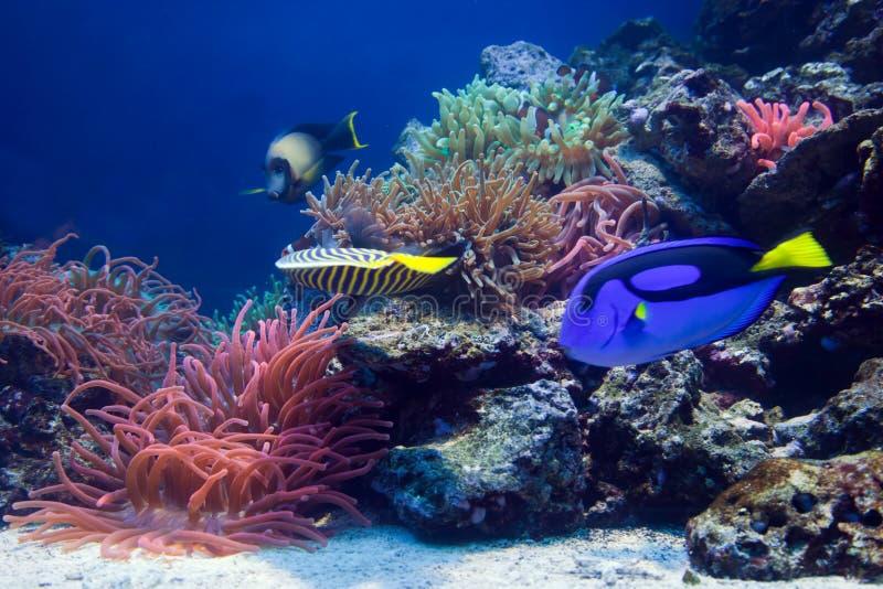 Het onderwater leven, Vissen, koraalrif royalty-vrije stock afbeeldingen