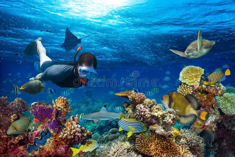 Het onderwaterkoraalriflandschap snorkling stock afbeelding