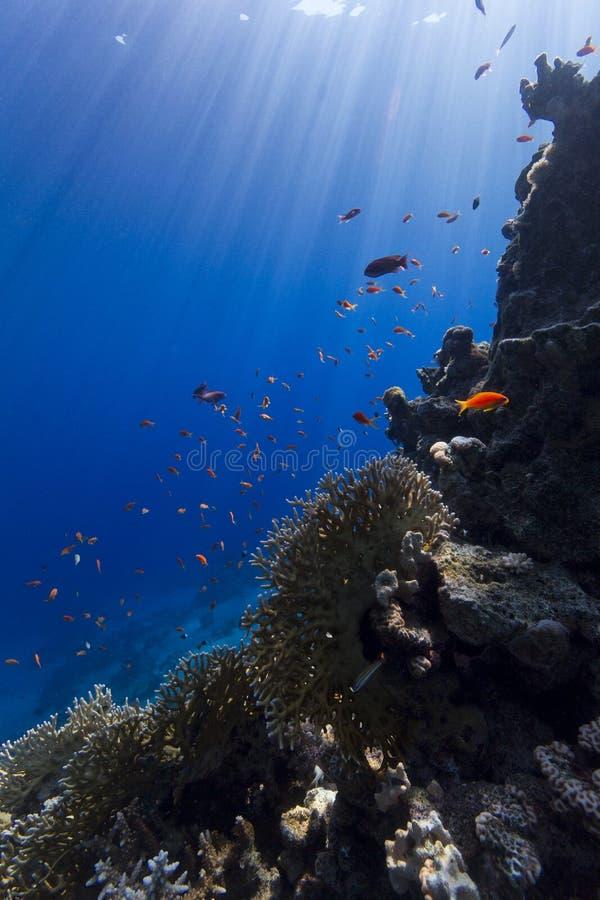 Het onderwaterleven royalty-vrije stock afbeeldingen