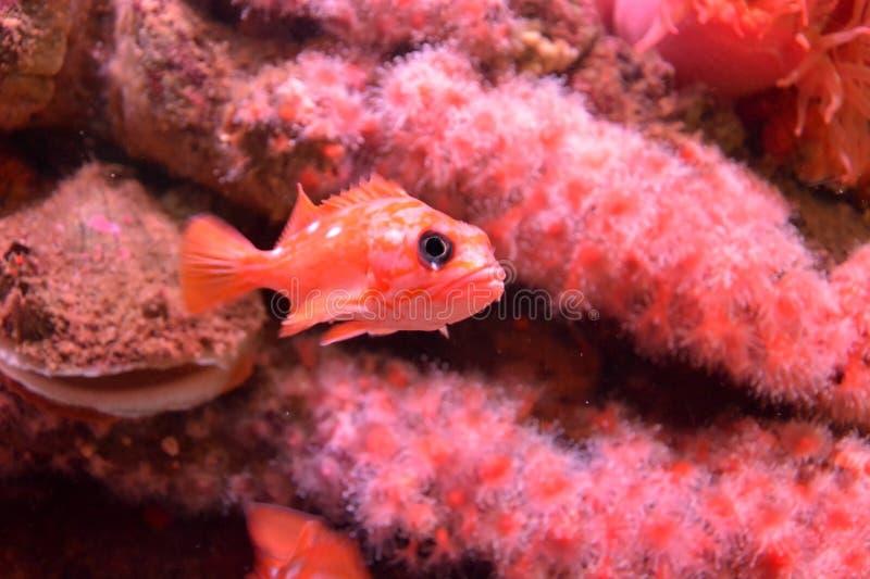 Het onderwaterleven stock fotografie