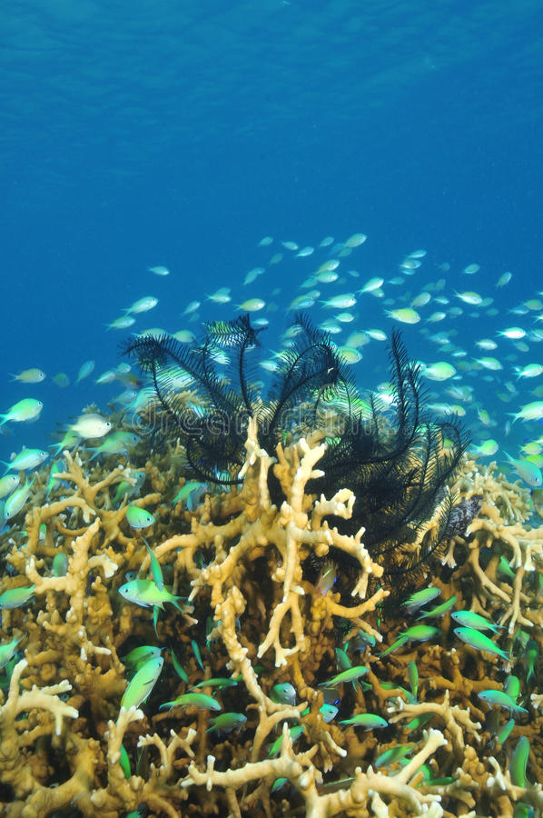 Het onderwaterleven stock foto's