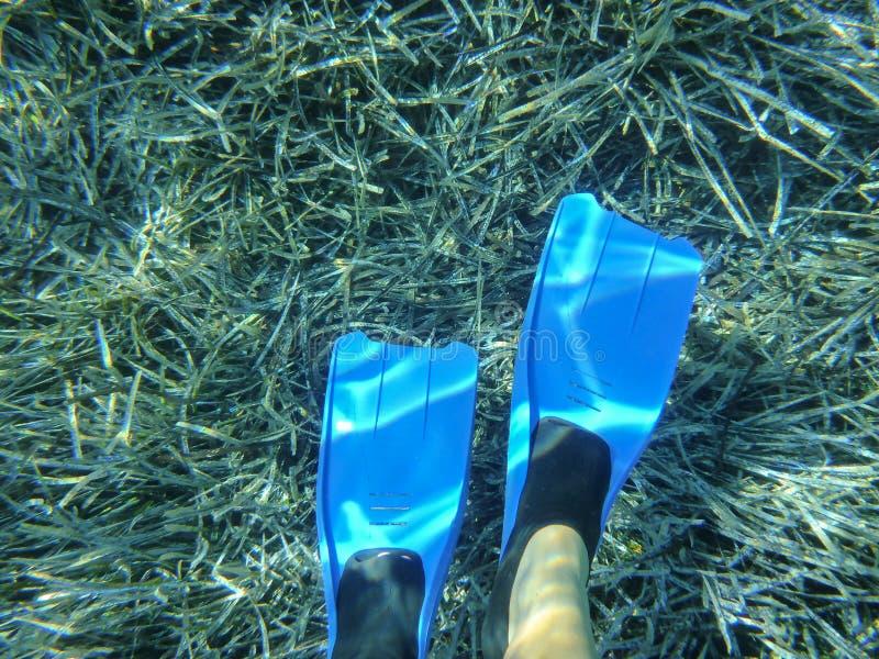 Het onderwaterleven - blauwe swimfins op waterplantenachtergrond in van de baaikythnos van Kolona het dubbele eiland Cycladen Gri royalty-vrije stock fotografie
