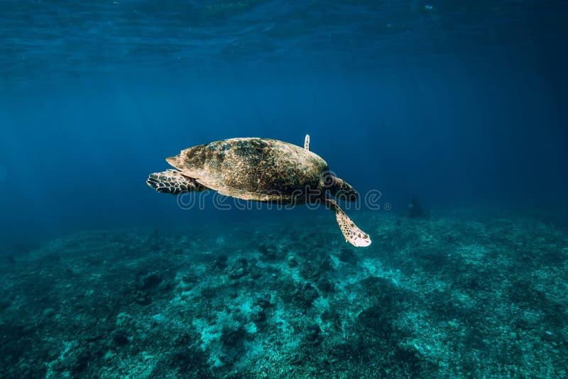 Het onderwaterwild met dieren E Groene Overzeese Schildpad stock afbeeldingen