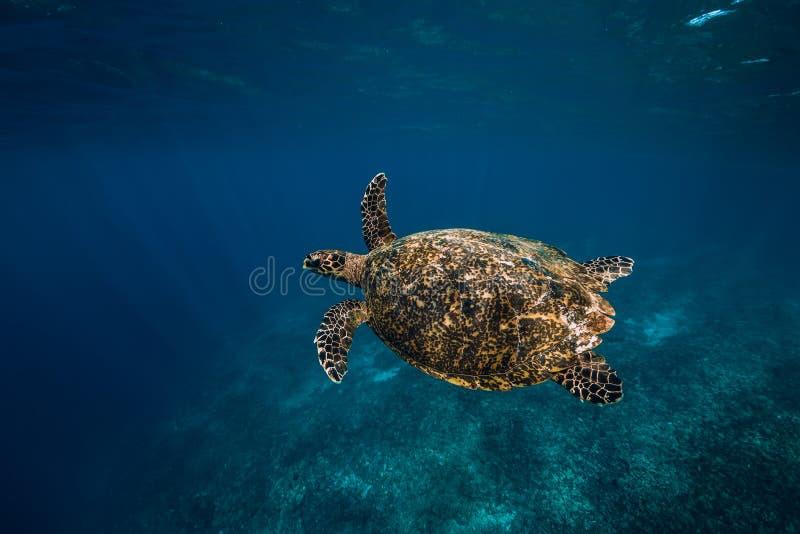 Het onderwaterwild met dieren E Groene Overzeese Schildpad royalty-vrije stock afbeeldingen